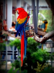 Pretty parrot at Salty Dog