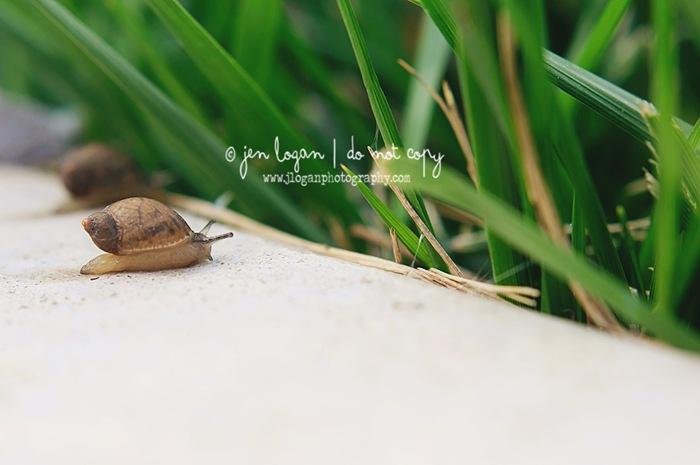 Snails-11 copy