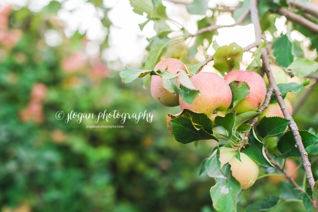 apple-50 copy